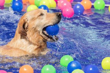 Ayuda a tu perro a combatir el calor