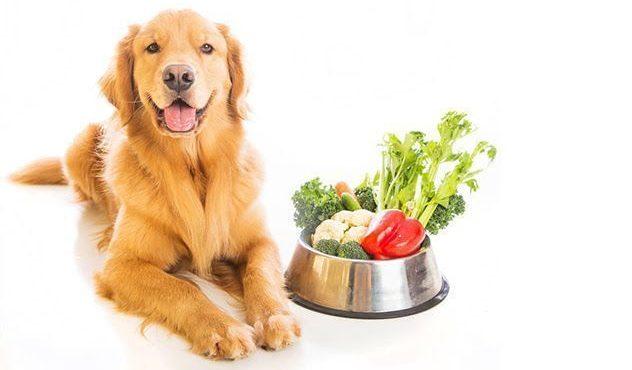 Piensos Veganos para perros