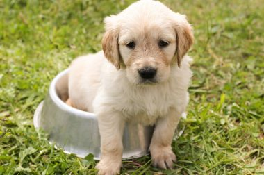 Si tu perro no come su alimento